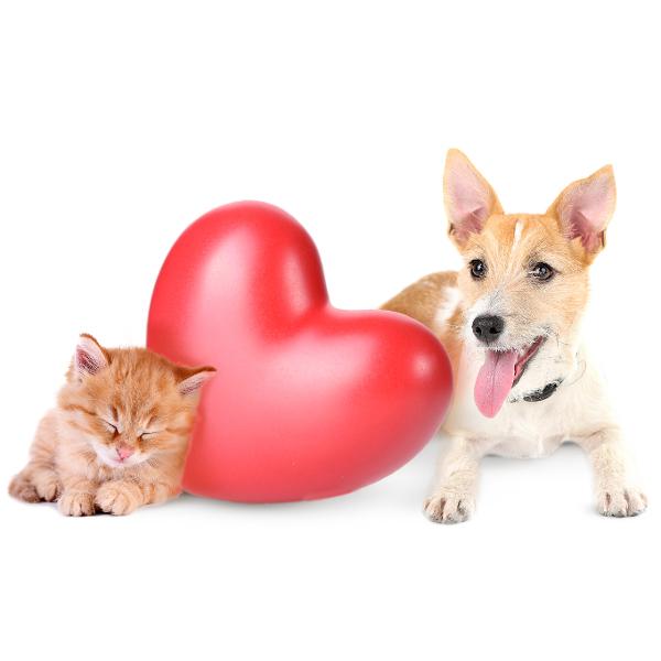 Аритмия сердца домашних животных - лечение у ветеринара кардиолога